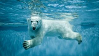 Некоторых млекопитающих можно назвать прирожденными пловцами