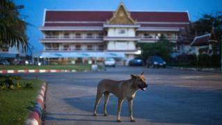 A stray dog wanders through a Buddhist temple on November 6, 2014 in Sakon Nakhon, Thailand