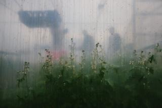 The transparent wall of the polytunnel showing plants on the other side
