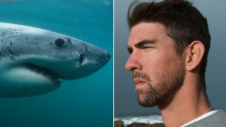акула, майкл Фелпс