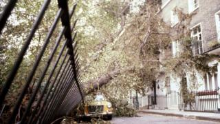 Fence and car crushed by trees in London