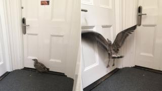 The bird in the Ipswich Police Station