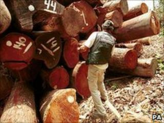 Illegally logged timber being marked (Image: PA)