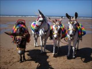 Donkeys on Blackpool Beach