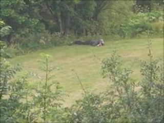 Raoul Moat lying a field during a stand-off with police (Pic: Steven Neailey)