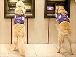 Dogs at bank cash machines