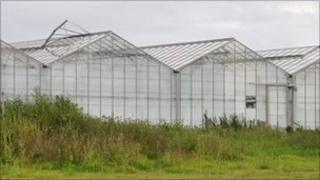 Greenhouses in St Sampson, Guernsey