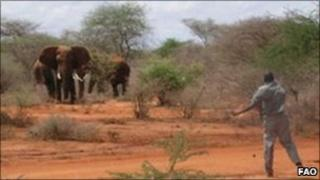 A man throwing stones at charging elephants