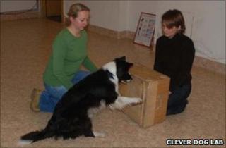 Dog doing door-opening task (Image: Clever Dog Lab)