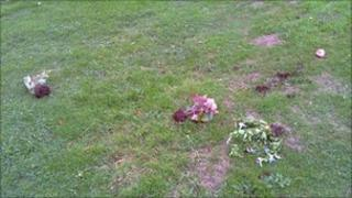 Plants on ground - Stroud Town Council