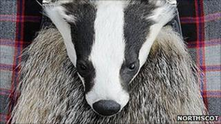 Badger sporran. Pic: Northscot