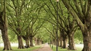 Trees in Cambridge