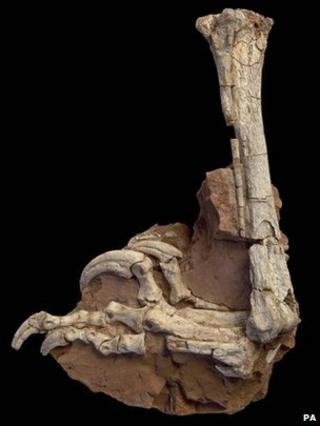 Balaur leg and foot (PA)