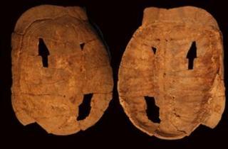 Tortoise shells found at Hilazon Tachtit (Munro)
