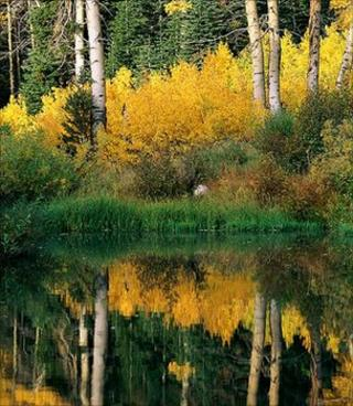 Aspen trees (Image: EyeWire)