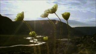 Plants in cold climate (On Ellesmere Island)