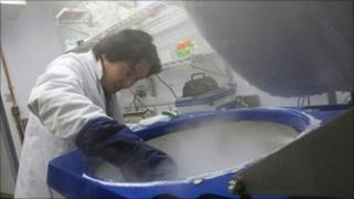 Man doing stem cell research