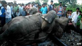 Indian villagers crowd around the carcass of an elephant at Moraghat Tea Garden near Binnaguri in Jalpaiguri district of India's West Bengal state