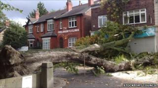 Fallen tree in Gatley