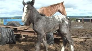 Horses rescued from the farm near Mallusk.