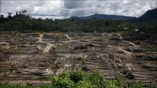 A timber depot in Sarawak, Malaysia