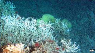 Deep sea coral reef in the Atlantic Ocean