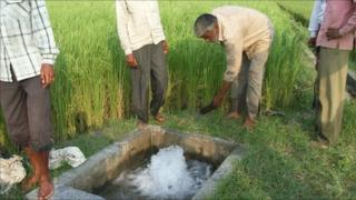 Farmers in India who use Exosect's methods checking the water supply