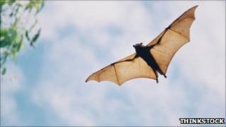 A bat flying through the air