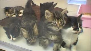 Kittens at the RSPCA's Ribbleton animal centre