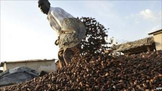 A Baoule farmer gathers cocoa beans on 17 November 2010