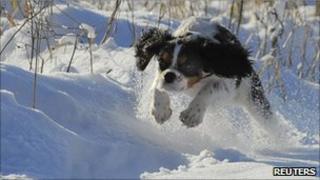 Dog in snow, Sutton Bank, North Yorks