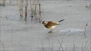 bird on ice generic