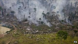 Man made fires to clear the land for cattle or crops in Sao Felix Do Xingu Municipality, Para, Brazil - 2008