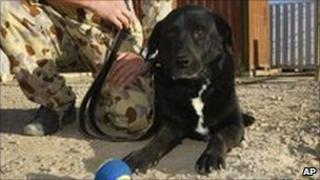 Sarbi the MIA sniffer dog (November 2009)