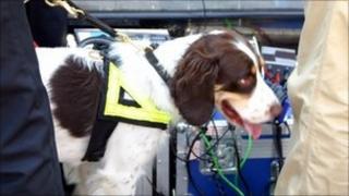 Police sniffer dog