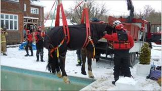 Horse being pulled to safety