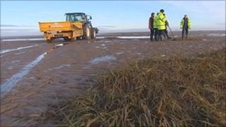 Salt marsh removal work at Cleethorpes