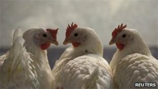 Chickens in the western town of Schleiden