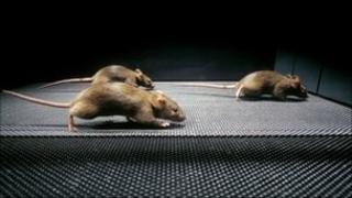 Mice (SPL)
