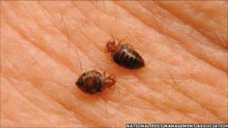 Bedbugs (file photo)