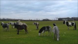Stray horses pictured in Llanelli last month