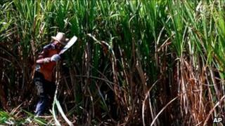 A Cuban cuts sugar cane, file picture April 1999