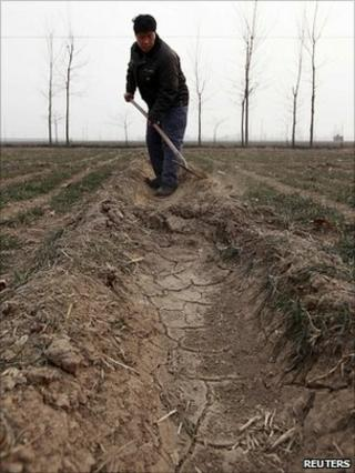 A farmer shovels soil for irrigating a wheat field on the outskirts in northern China