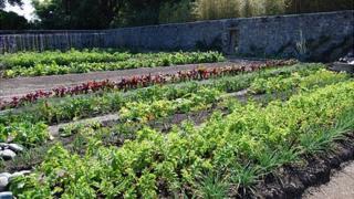 Victorian Walled Kitchen Garden at Saumarez Park, Guernsey