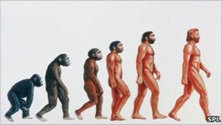 Graphic illustrating Darwin's origins of man