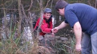 The crayfish were moved to ponds in a disused quarry