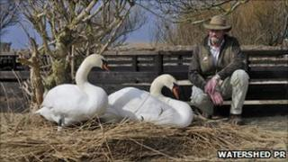 Dave Wheeler, head swanherd at Abbotsbury Swannery with two swans nesting on one of his hand-built nests. Copyright of Watershed PR.