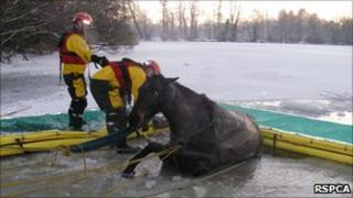 Horse being rescued on Christmas Day - Pic courtesy of RSPCA