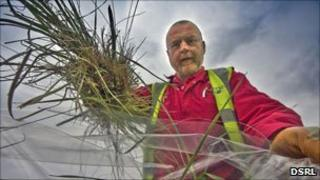 Grass samples taken from Dounreay nuclear site. Pic: DSRL
