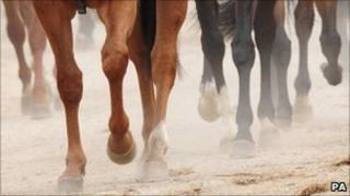 Horses legs